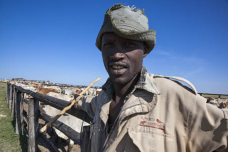 AC86 Cattle herder, Ol Pejeta