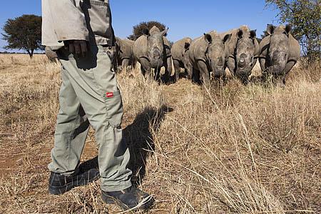 ACPF23 Rhino farming