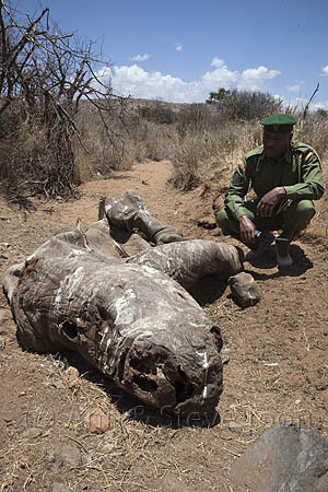 Poached white rhino