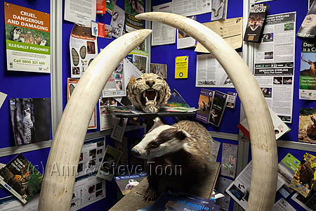 BCT01 Wildlife crime display, National Wildlife Crime Unit
