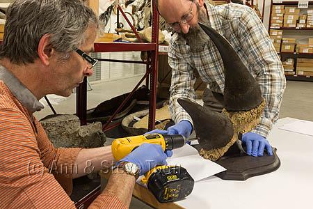 ACPD15 Sampling museum rhino horn for DNA analysis