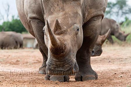 September 22 is World Rhino Day