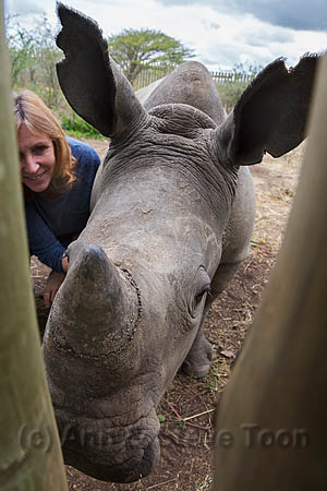 Ithuba, white rhino calf (Ceratotherium simum) orphaned by poaching, with Karen Trendler, Rhino Response Strategy, Thula Thula rhino orphanage, KwaZulu-Natal, South Africa, May 2015