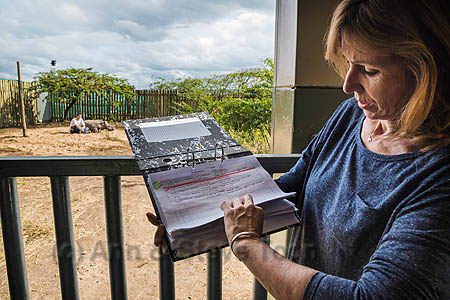Ithuba, white rhino calf (Ceratotherium simum) orphaned by poaching is checked up on by Karen Trendler, Rhino Response Strategy, Thula Thula rhino orphanage, KwaZulu-Natal, South Africa, May 2015