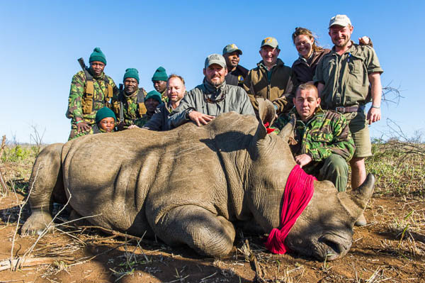 White Rhino capture and notching operation